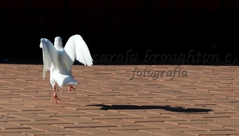 Aves 7