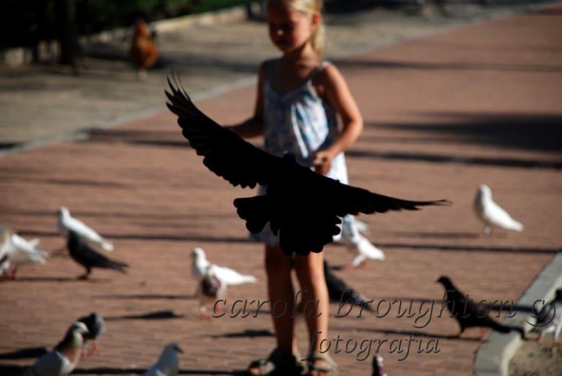 Aves 12