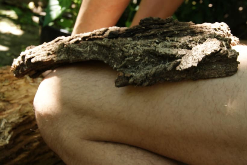Texturas de la naturaleza 1