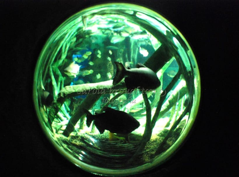 Sea Life 8