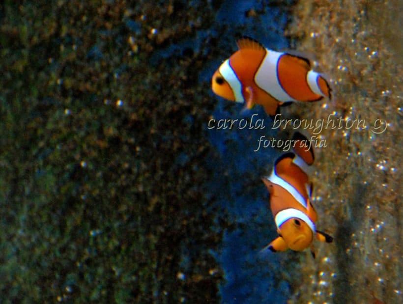 Sea Life 7
