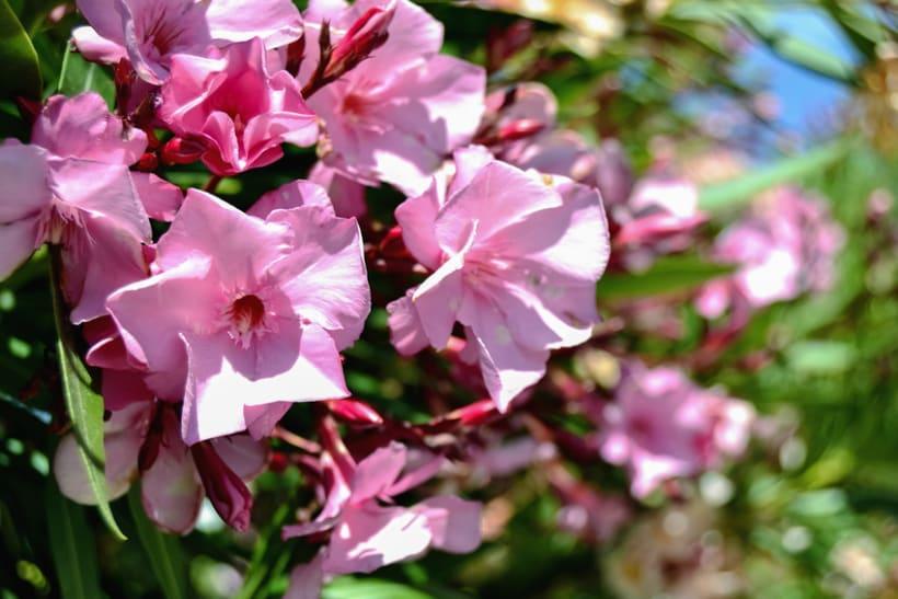 Fotos de Flores 3