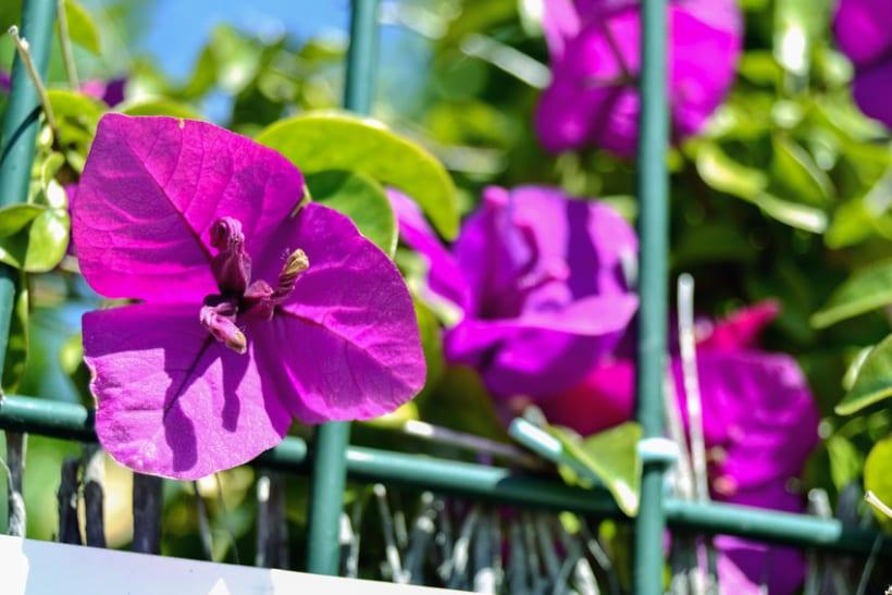 Fotos de Flores 5