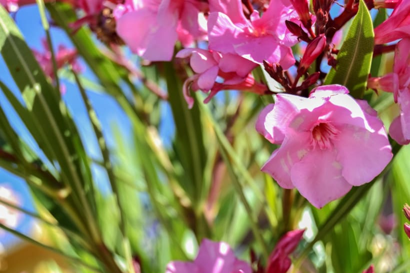 Fotos de Flores 2