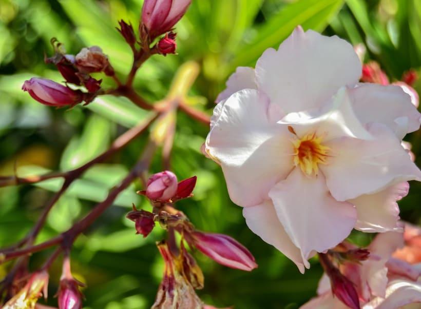 Fotos de Flores 1
