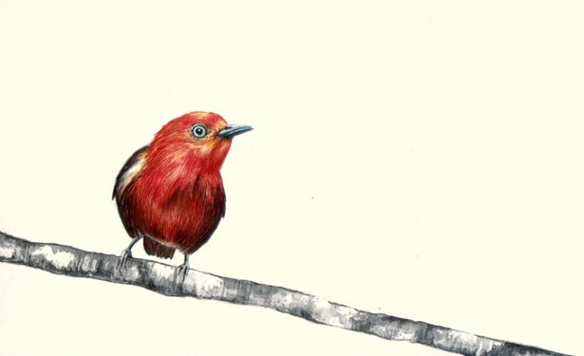 Proyectos personales de ilustración 4