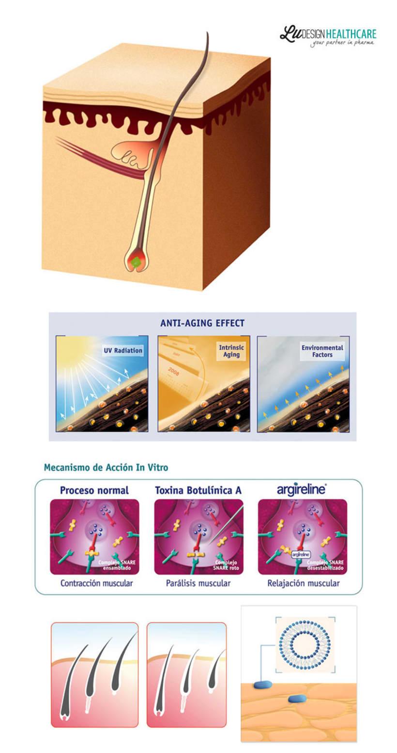 Ilustraciones Científicas 1