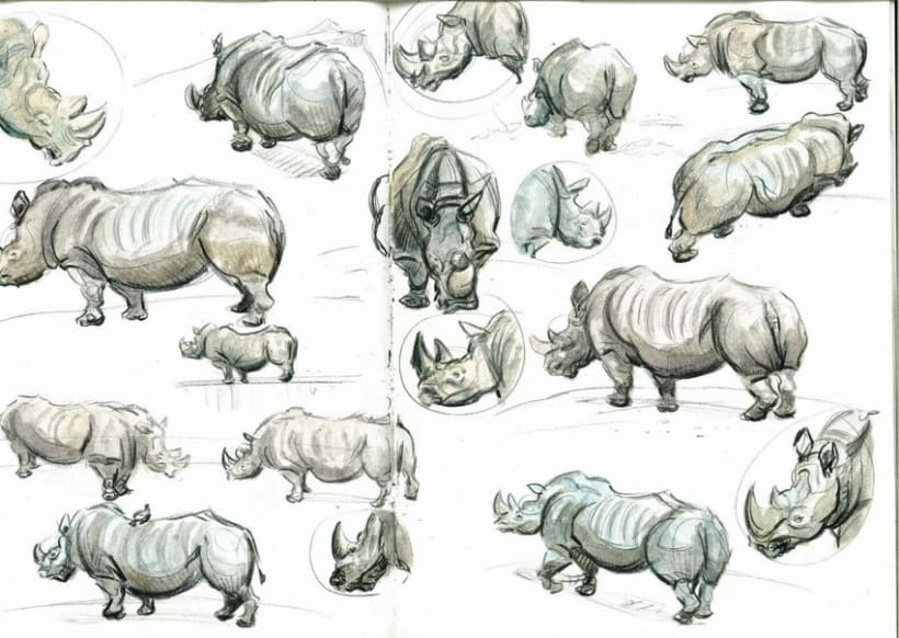 APUNTES DE ANIMALES 2