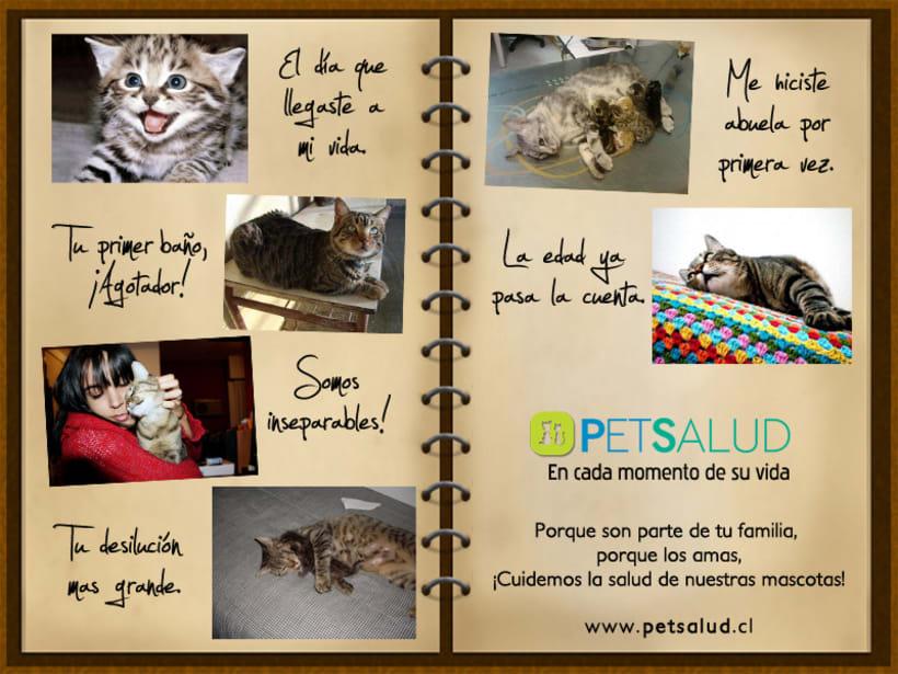 Pet Salud 8