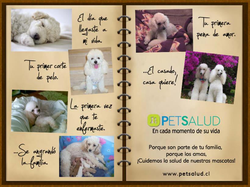 Pet Salud 7