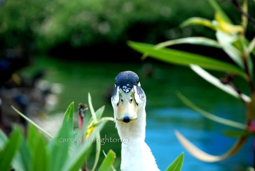 Aves 5