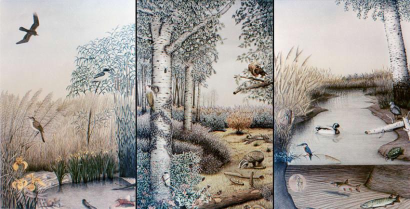Ilustración Naturalista 2
