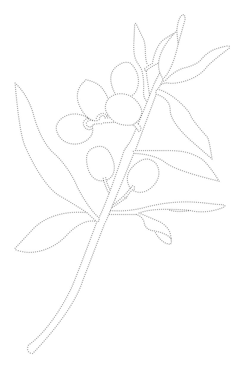 Alta Flor Olive Oil 1