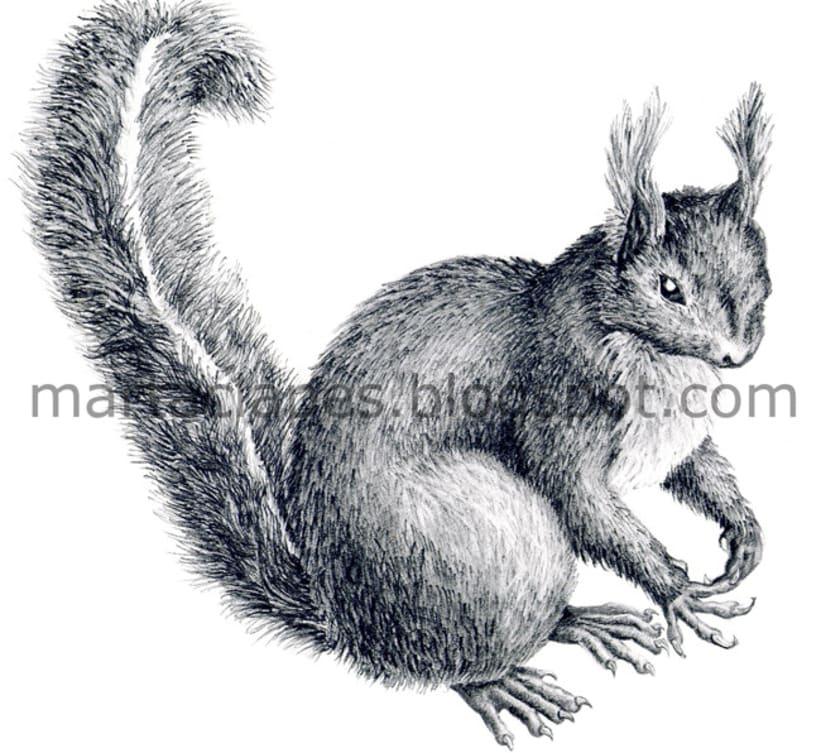 NATURE -ilustraciones 3