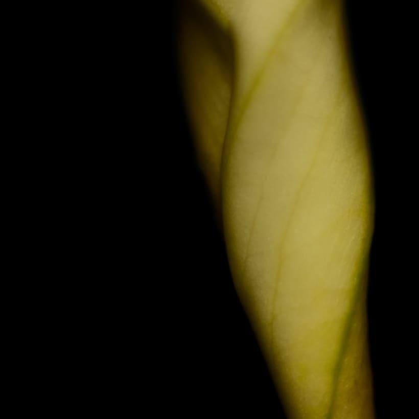 La parte por el todo. Abstracción Floral 10