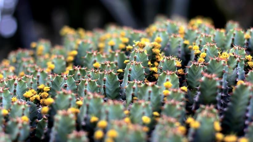 Jardín botánico 4
