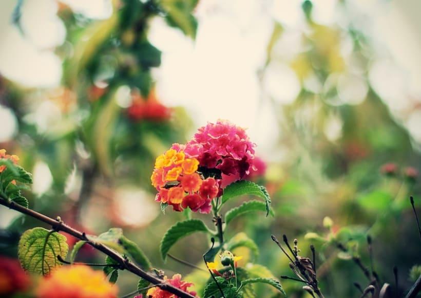 Jardín botánico 6