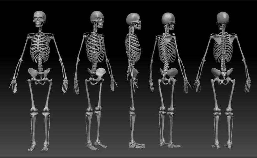 Human Anatomy 1