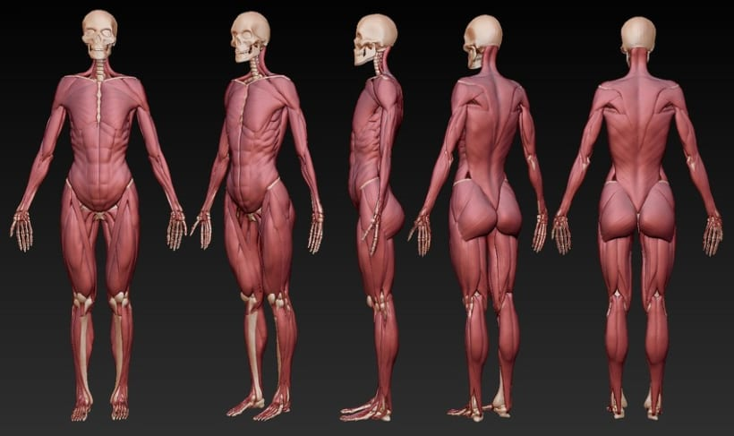 Human Anatomy 2