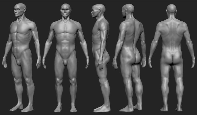 Human Anatomy 3