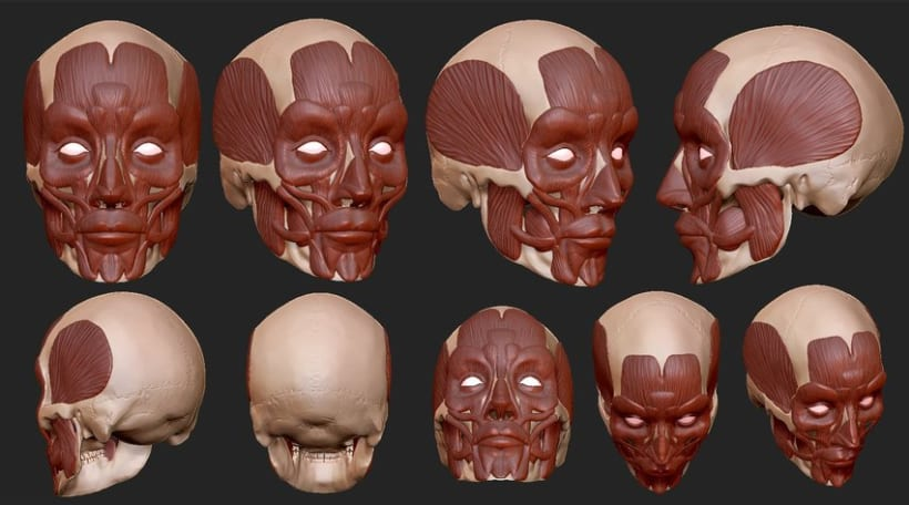 Human Anatomy Domestika