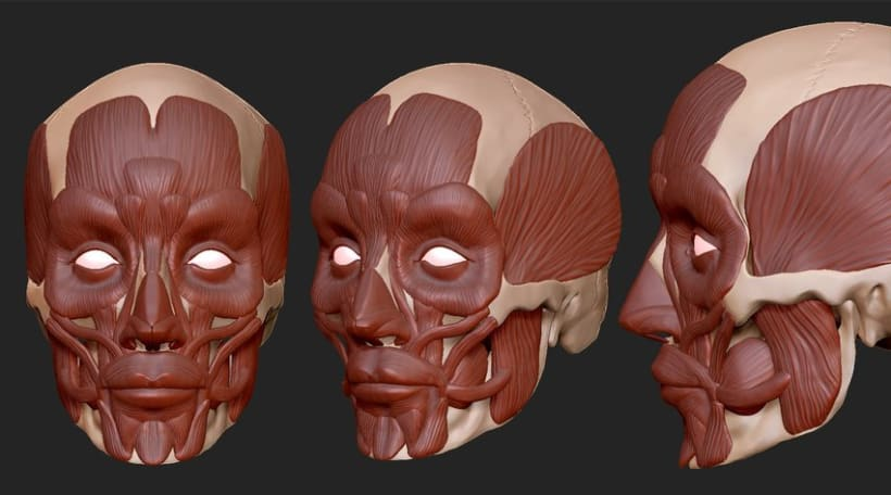 Human Anatomy 5