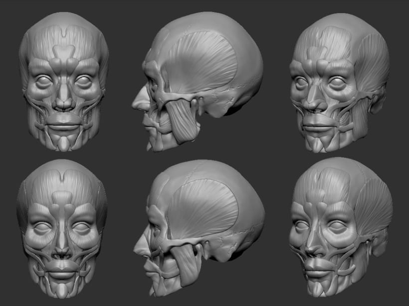 Human Face Anatomy For Artists