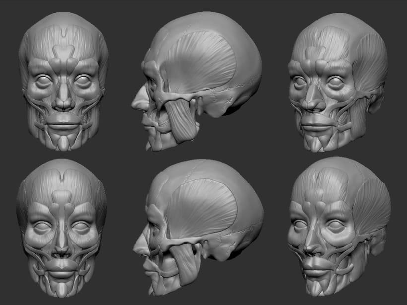 Human Face Anatomy Human Anatomy 6