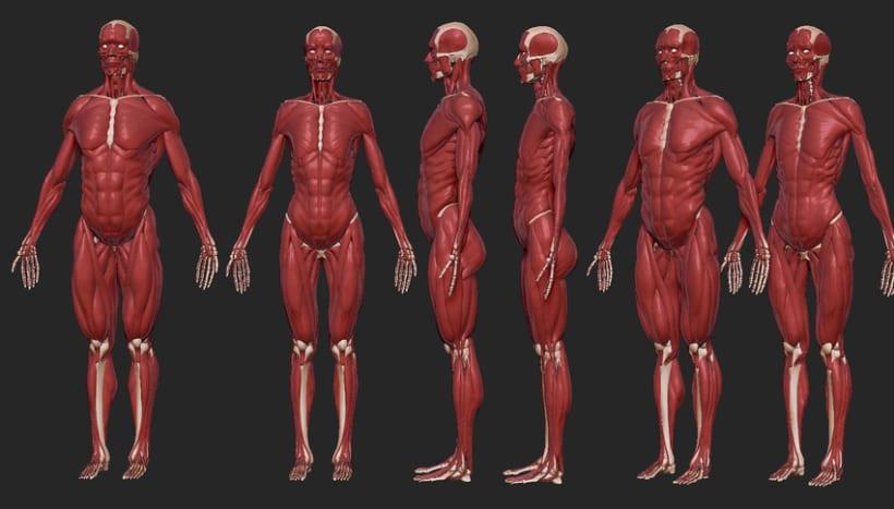 Human Anatomy 7