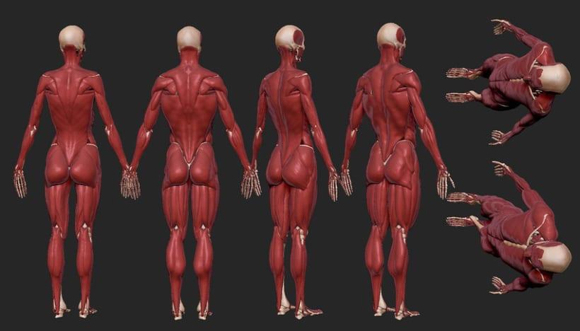 Human Anatomy 8