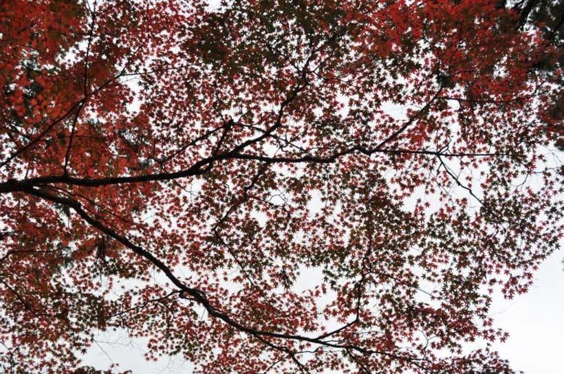 Colores de La Naturaleza 3