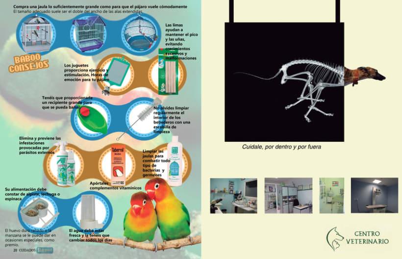 Proyecto revista 11