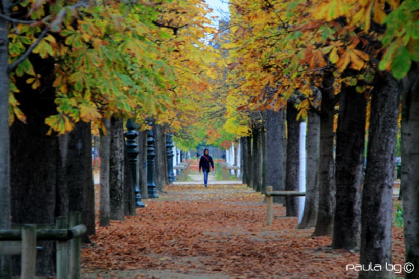 Photo: Paris automne (Paris autumn) 14