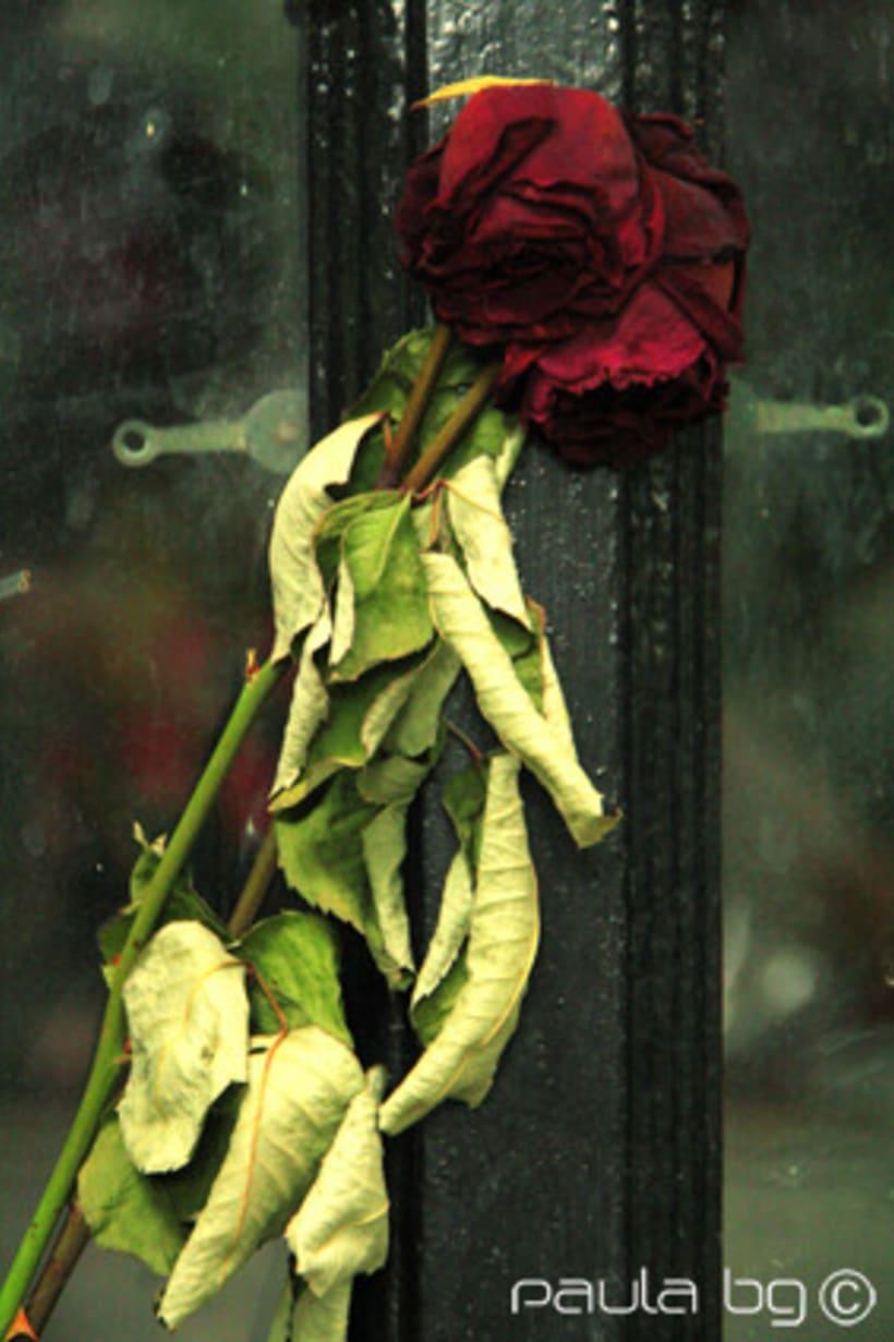 Photo: cimetière Paris 12