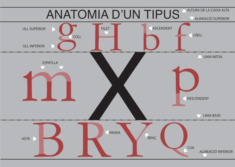anatomia de una tipo 1