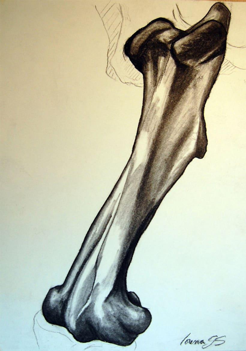 Dibujo analítico de la figura humana - Huesos | Domestika