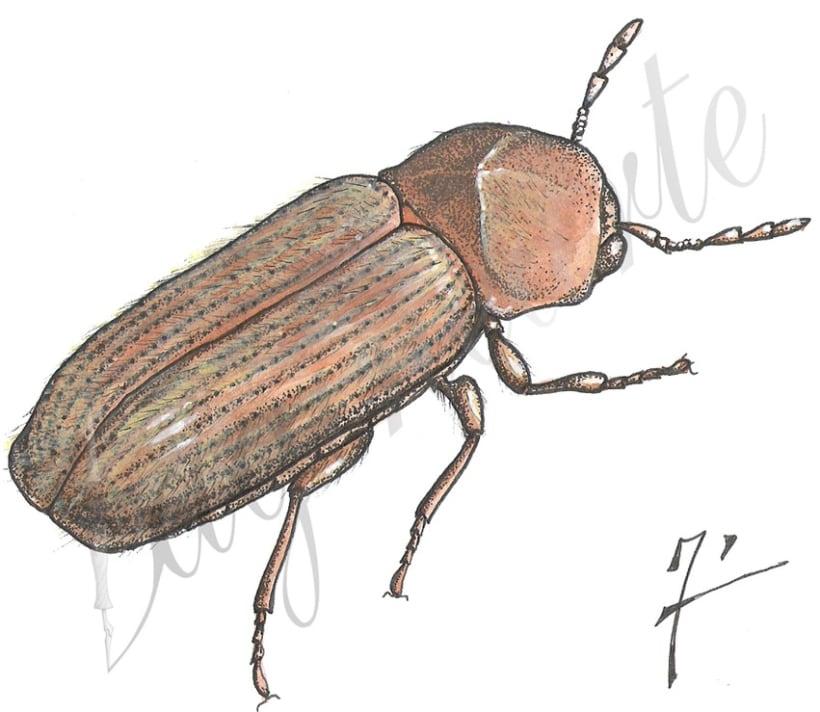 Insectos y patrimonio 7