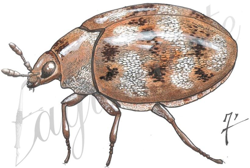 Insectos y patrimonio 6
