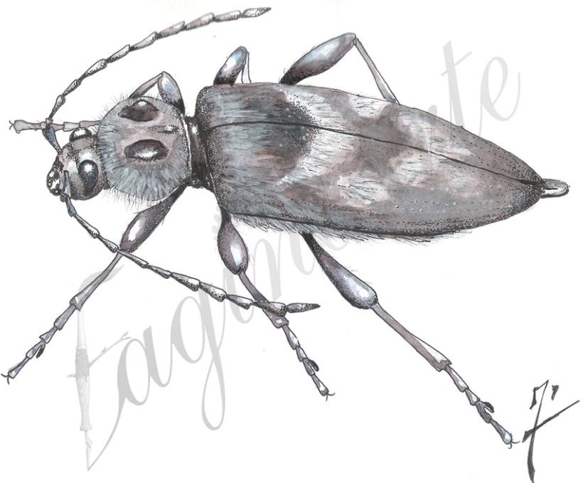 Insectos y patrimonio 5