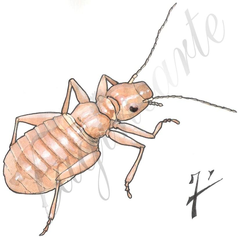 Insectos y patrimonio 4