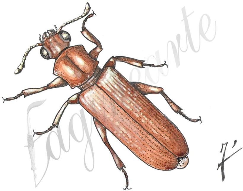 Insectos y patrimonio 3