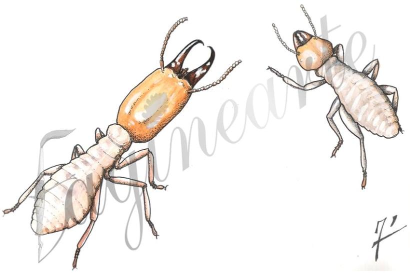 Insectos y patrimonio 2