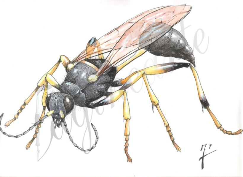 Insectos y patrimonio 1