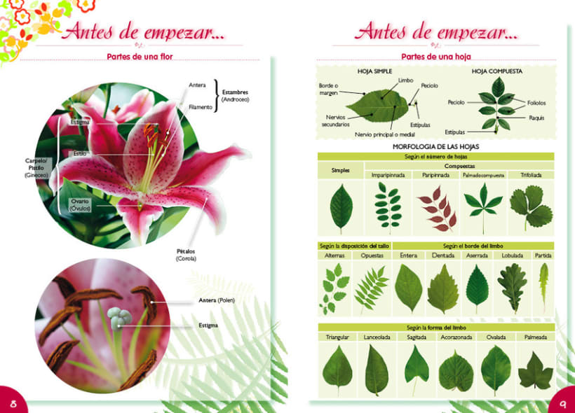 Entre Flores 5