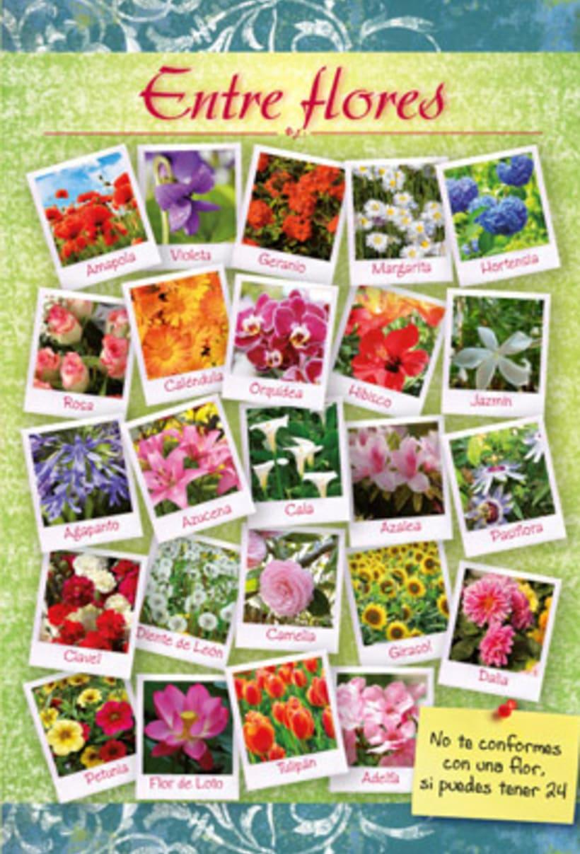 Entre Flores 3