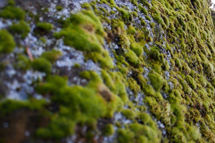Reportaje Fotográfico Sierra de Madrid 13