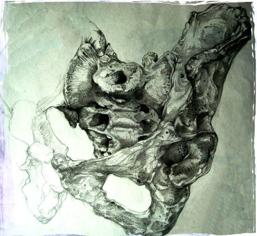Bones / Huesos  2