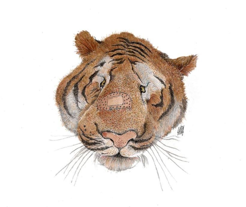 Ilustración animales del Zoo (Jerez) 7