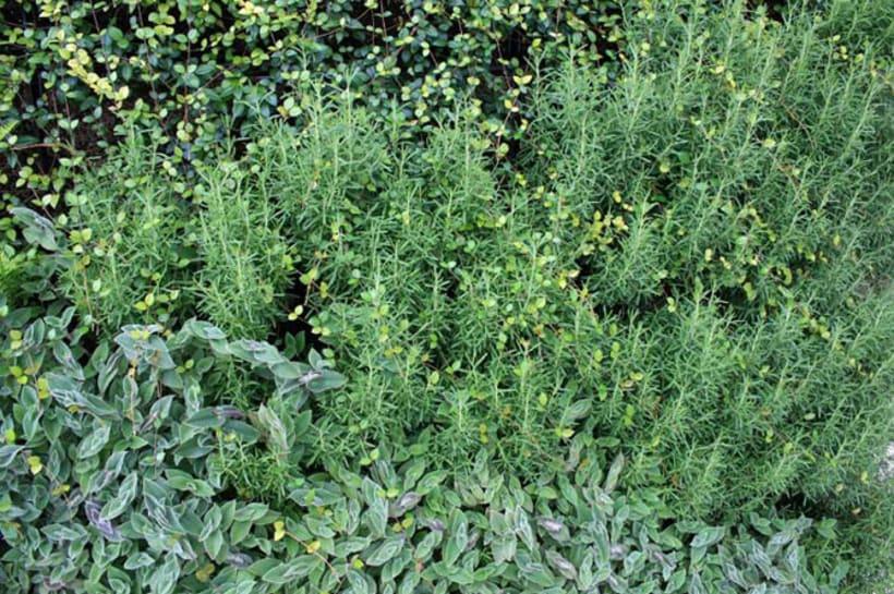 Biozotea 3