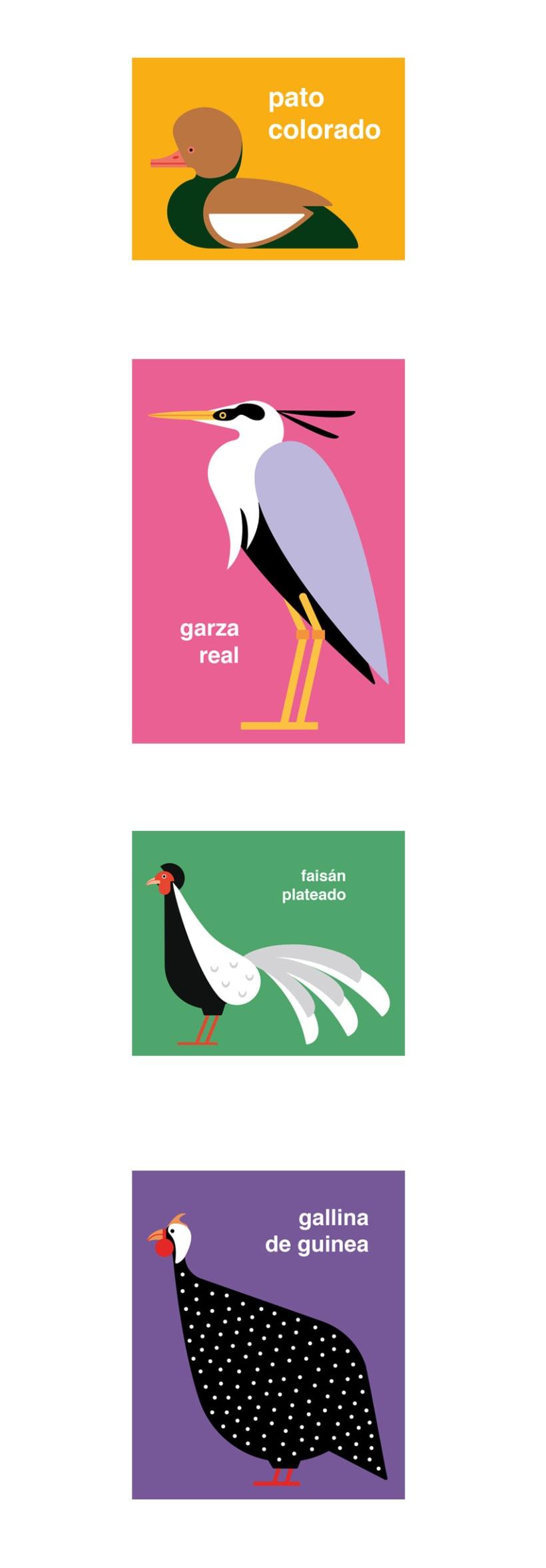 Pájaros 1